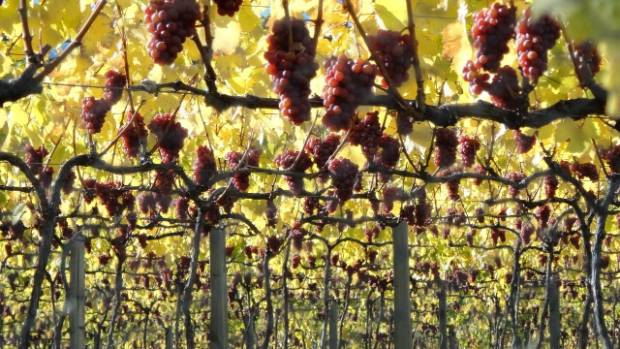 A lower Kiwi dollar saw wine exports to the US, Canada and Britain surge.