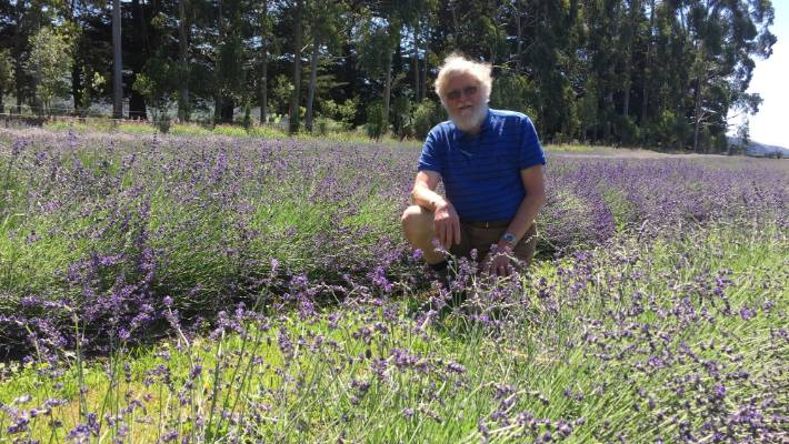Ten years in the lavender business is paying off for Russell Rofe