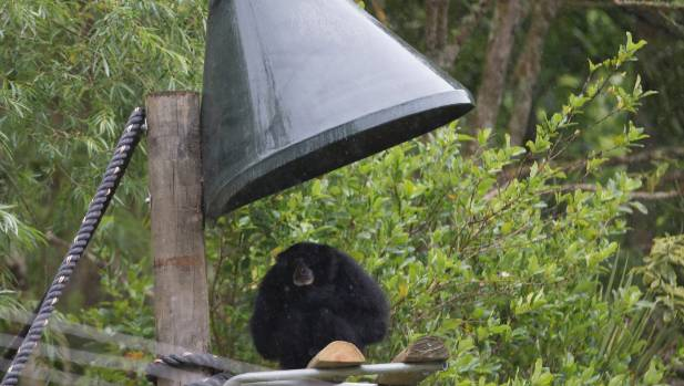 An upturned funnel provides shelter for the primates in their outdoor enclosure.
