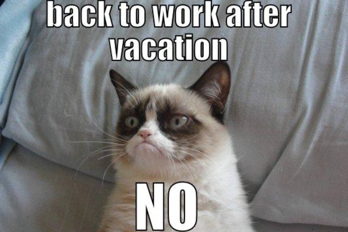 The 10 back to work memes that sum up how we really feel stuff co nz