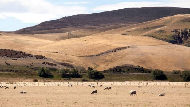 The effects of unrelenting drought show on the hills on Mark and Sam Zino's Hawarden farm.