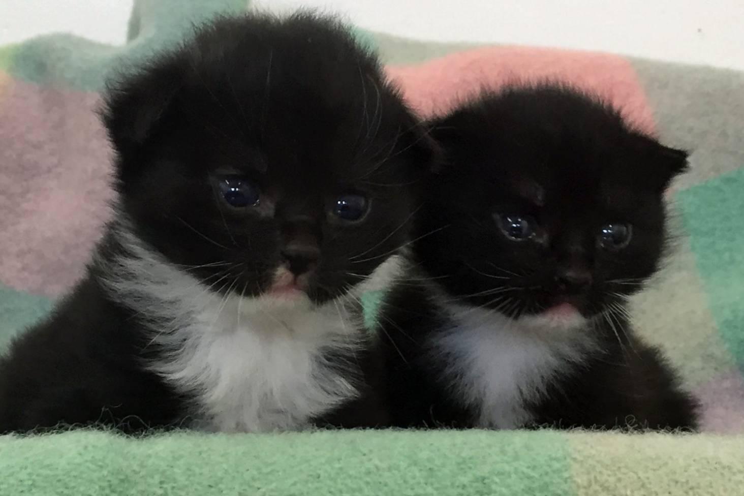 Spca Alerted To Three Week Old Kittens Dumped By Hutt River Stuff Co Nz