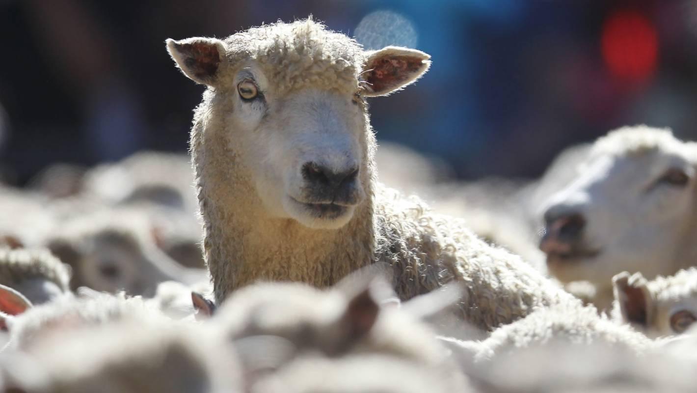 Melbourne sheep farm in Australia's fastest growing suburb ...