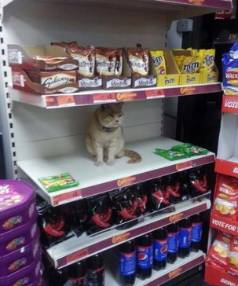 The cat returns to the shop after staff remove him.
