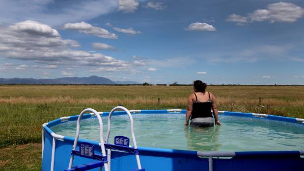 Taking a dip in a pool to escape the dry summer heat last year on a Waikato farm.
