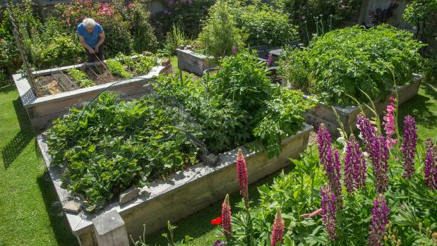 The raised vegetable beds are an early favourite in Diana Madgin's new garden.