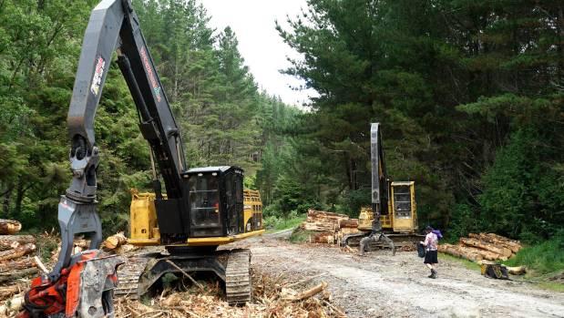 The Gordon Kear Forest where the Te Araroa trail heads through a logging area.