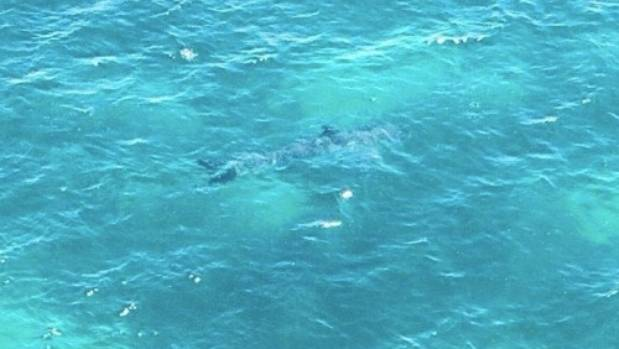 The large shark was seen about 200 metres off Marino Rocks in South Australia.