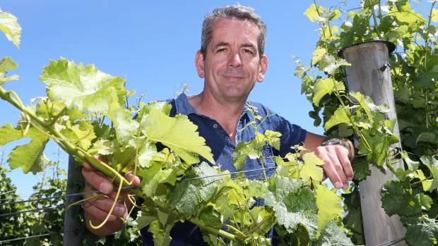 Patrick Materman says sauvignon blanc is still the wine the world wants from New Zealand.