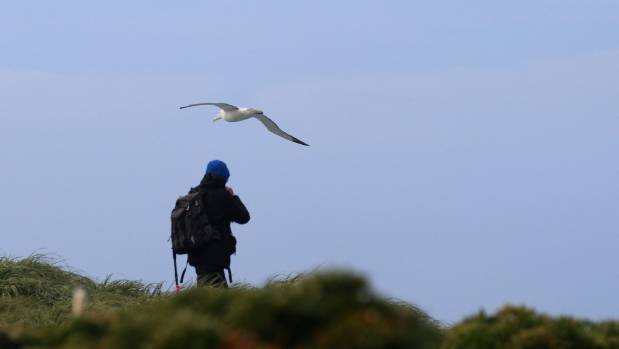 """""""Just about whatever's there is amazing"""" said Jeremy Tizard of the subantarctic Auckland Islands. A royal albatross is ..."""