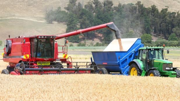 Seddon farmer Andrew Jones harvesting wheat at Starborough farm.
