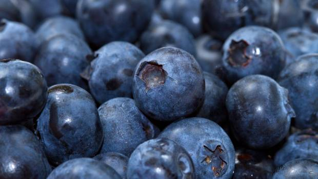 Blueberries were found to improve the thinking performance of adults in a recent study.
