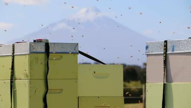 New Zealand honey bees have relied on David Yanke's breeding work.