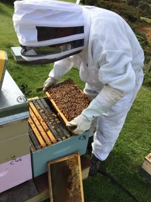 An Egmont Honey beekeeper at work.