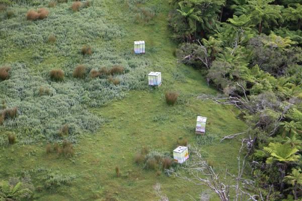 Egmont Honey beehives near a manuka block in Taranaki.