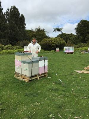 Egmont Honey co-owner James Annabell with some of the company's beehvies on a South Taranaki property.