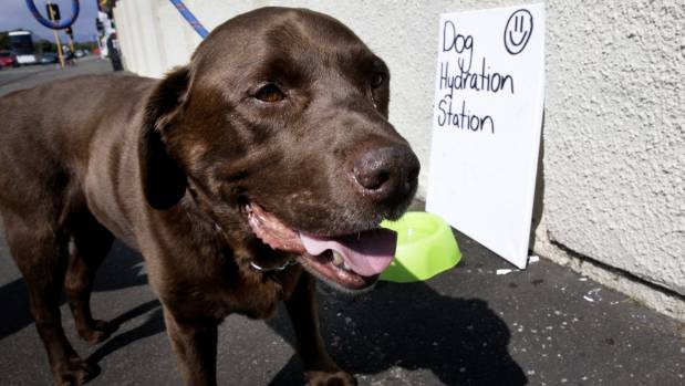 Hamish the dog checks out the dog hydration station in Main Street.