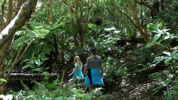 Imagine of the benefits if this type of experience, walking through native bush at Hinewai Reserve, Banks Peninsula, was ...