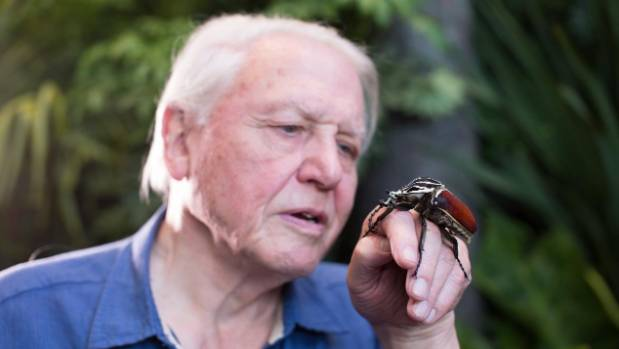 Pre-sale to second David Attenborough show sells out in ...