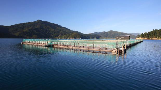 New Zealand King Salmon cages in the Marlborough Sounds.