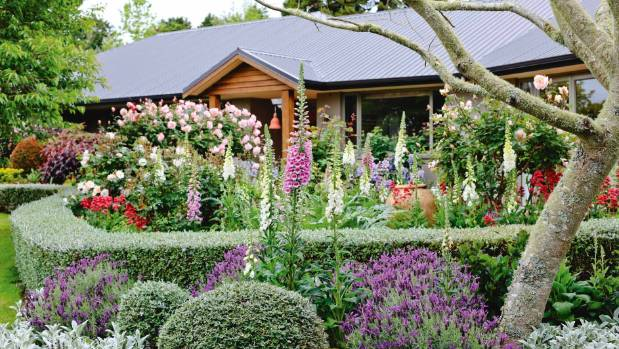 Want an easy care hedge choose these plants for Easy care front gardens