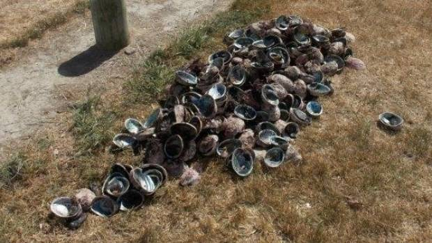 More than 315 paua were dumped beside the Colombo Rd netball courts in Masterton. They were mostly undersized.