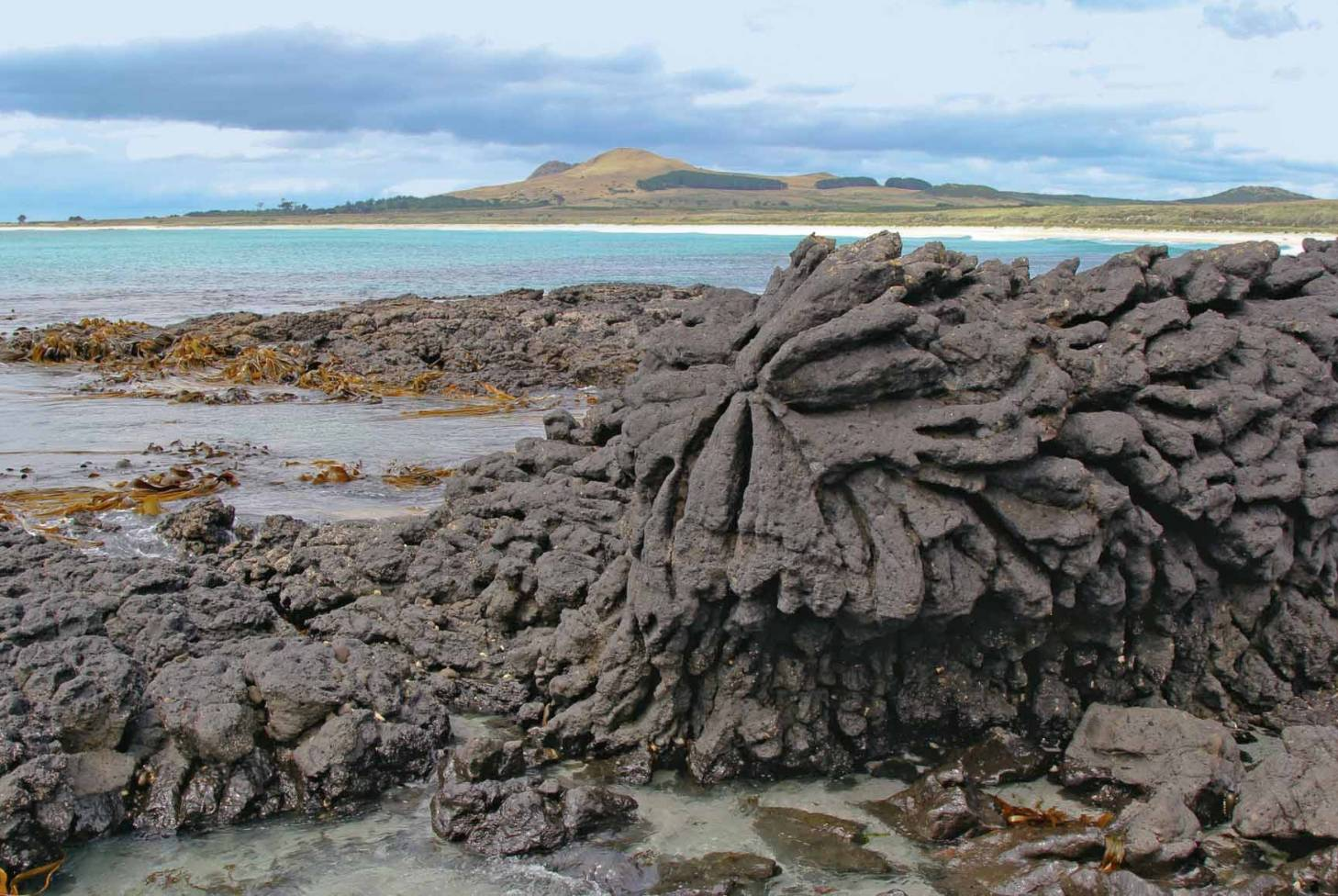 Amazing plants of the Chatham Islands | Stuff co nz