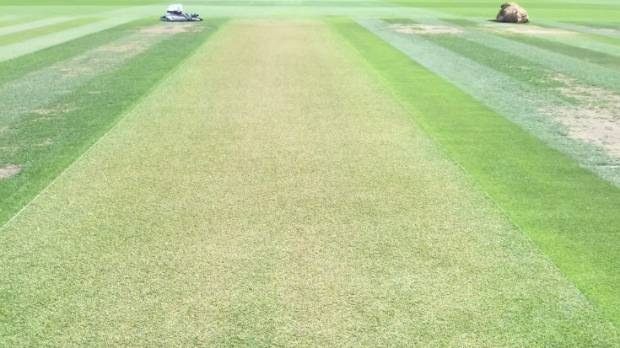 how to create a cricket pitch