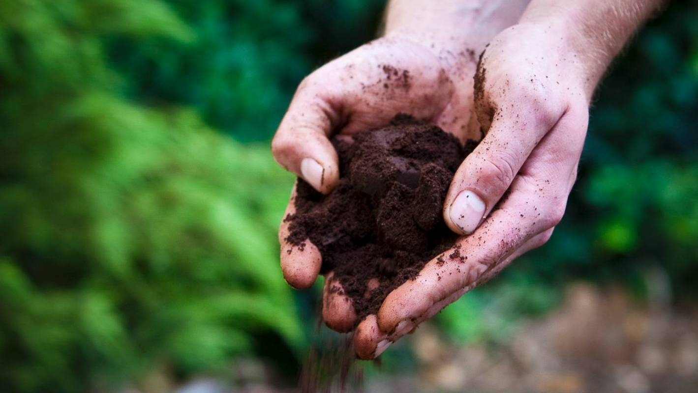 Think coffee grounds are good for your plants sorry you - Are coffee grounds good for your garden ...