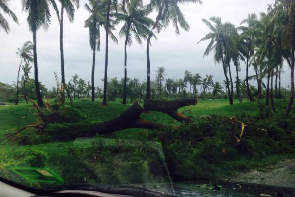 There are many reports of trees down on the Fijian islands after Cyclone Winston. This photo was taken on Denerau Island.