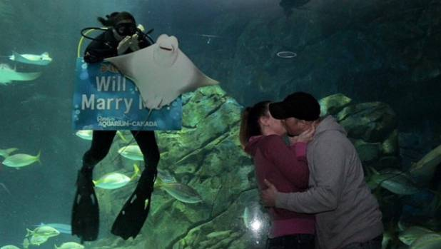 The stingray didn't even consider giving the newly-engaged  couple some privacy.