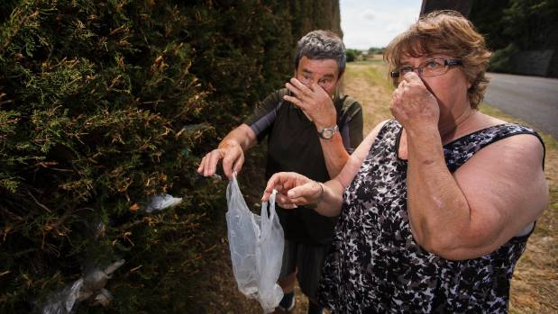 Feilding residents Tony and Sue Lee were not expecting to find a stash of dog poo baggies in their hedge when it came ...