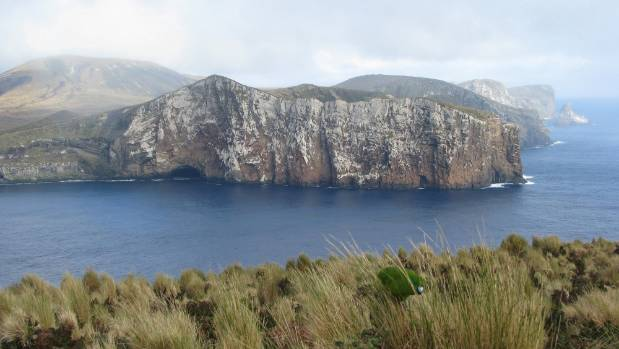 Antipodes Island from Bollons Island with an Antipodes Parakeet in foreground.