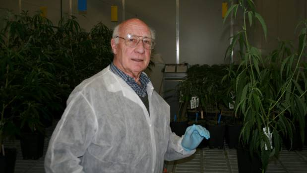 Eminent horticulture researcher Dr Mike Nichols in a cannabis plant factory in the Netherlands. He is one of only 25 ...