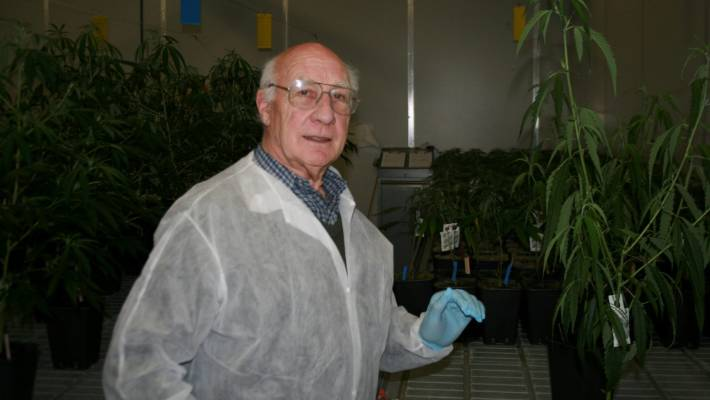 Eminent horticulture researcher Dr Mike Nichols in a cannabis plant factory in the Netherlands. He is one of only 25 honorary members of the International Society for Horticulture Science.