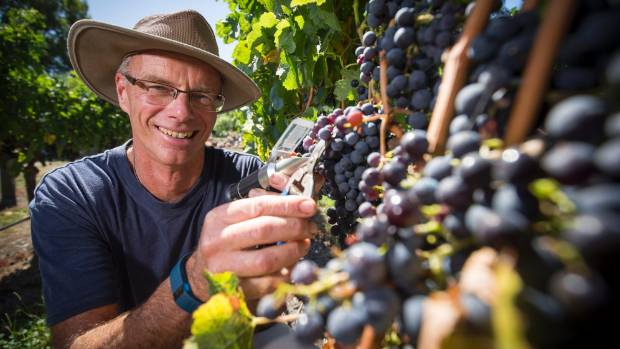 Xan Harding, deputy chair of Hawke's Bay Winegrowers, says cabernet sauvignon growers will be hoping the forecast rain ...