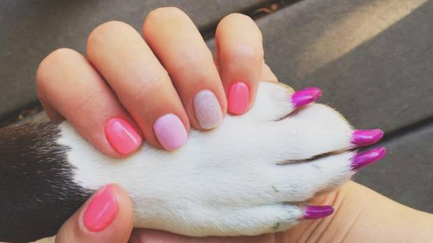 Crazy New Pet Trend Cats Dogs And Even Pigs Wearing Nail Polish Stuff Co Nz