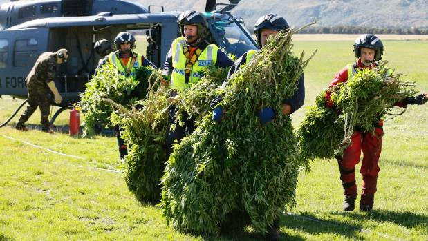 Police keep trying to disrupt cannabis growing operations, but not that many people seem to want to speak out loudly in ...