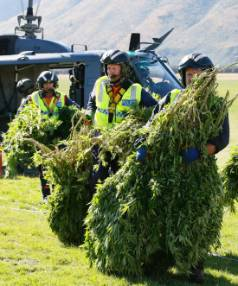 Police and Royal New Zealand Air Force staff with cannabis recovered from Marlborough during last year's aerial ...