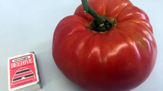 Jeff Reardon has grown this whopper tomato, which weighs 850g, in his garden in Kaikoura.