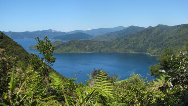The Queen Charlotte Track in the Marlborough Sounds