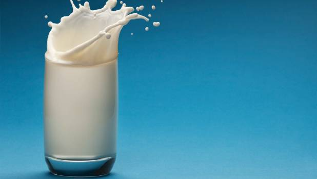 Is there an option for lactose intolerant people to go back to regular dairy?