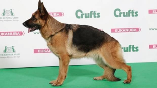 Nz Kennel Club National Dog Show