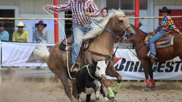 Petition To Ban Rodeos In Nz Received At Parliament