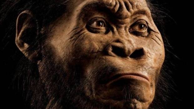 Homo naledi, an early human species found in South Africa.