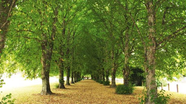 Take a walk along the Soldier's Memorial avenue of lime trees.