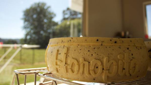 Horopito, a semi-creamy, semi-hard cheese flavoured with cracked pepper,  is one of Wangapeka's most popular varieties.