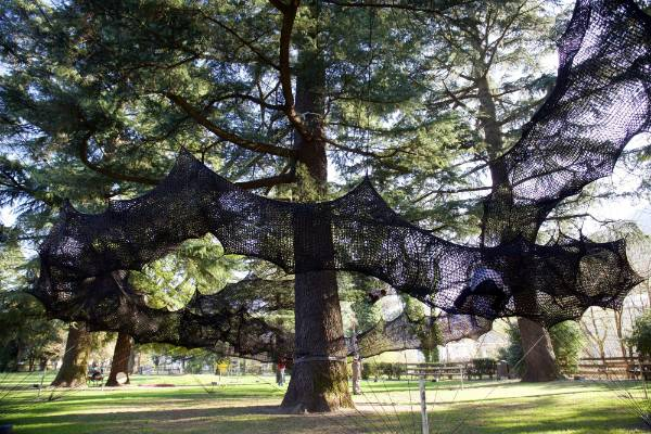 giant cocoon net makes tree climbing a fun safe exercise for kids