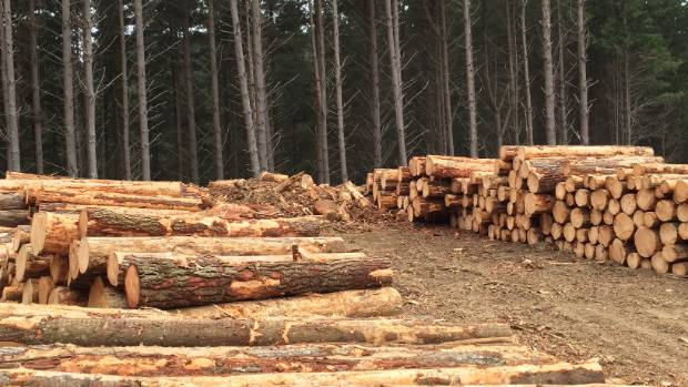 Logs at the Te Horo site where new health and safety rules are already being strictly adhered to