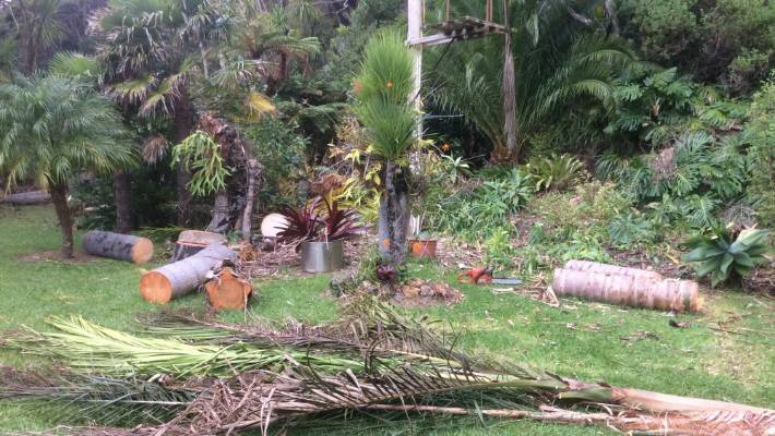 Couple appalled at 'chainsaw massacre' of their garden by Vector